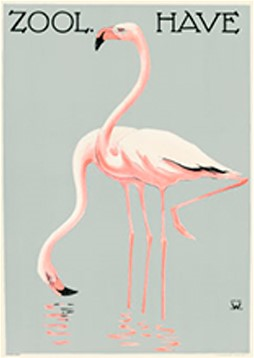 Flamingoer / Zoo 11